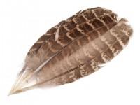 10 Fasanen Feder klein 10-18cm