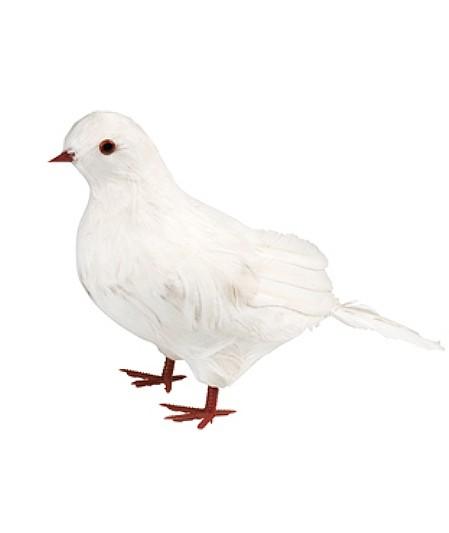 Vogel weisse Brieftaube