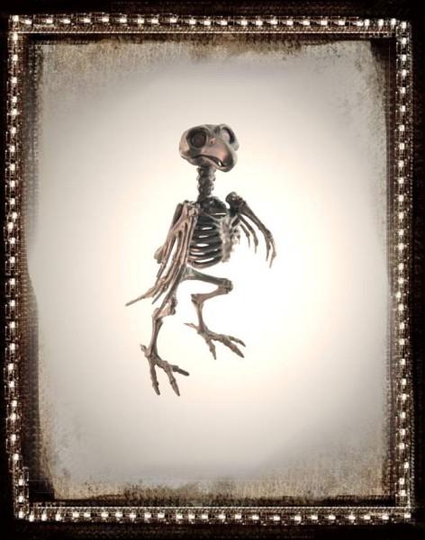 Skelett Rabe 20cm