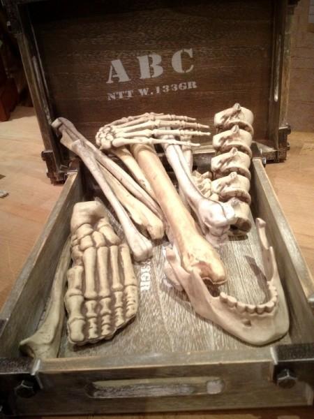 Knochenset 13-teilig Gebeine